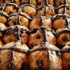 Hot Cross Buns (Chocolate) 6pcs FROZEN